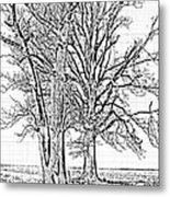 Winter Oaks IIi Metal Print