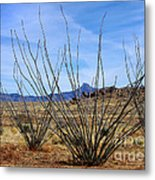 Winter Ocotillo Garden Metal Print