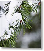 Winter Pine Branches Metal Print