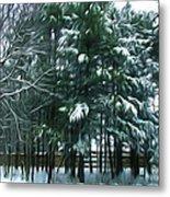 Winter Pine Tree  Metal Print