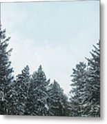 Winter Pines Metal Print