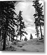 Winter Pines Silhouetted Against The Sky Metal Print