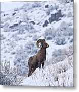 Winter Ram Metal Print