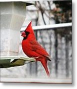 Winter Red Bird Metal Print
