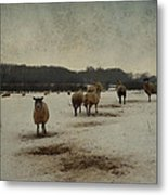 Winter Sheep Metal Print