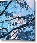 Winter Sky And Snowy Japanese Maple Metal Print