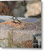 Winter Snack Metal Print