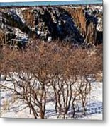 Winter Sprouts Metal Print