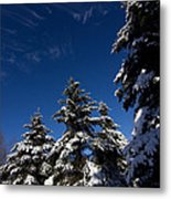 Winter Spruce Metal Print by Steven Valkenberg