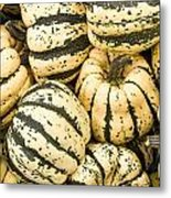 Winter Squash Metal Print
