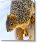 Winter Squirrel Metal Print
