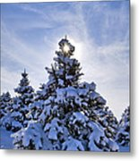 Winter Starburst - D008347 Metal Print