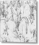 Winter Starkness Metal Print