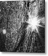 Winter Sunburst Metal Print