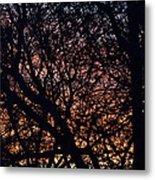 Winter Sunset Silhouette Metal Print