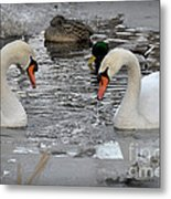 Winter Swans  Metal Print