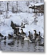 Winter Swimming Hole Metal Print