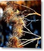 Winter Thistles  Metal Print