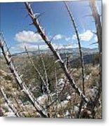 Winter Thorns Metal Print