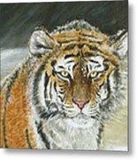 Winter Tiger Metal Print