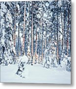 Winter Time In Forest Metal Print