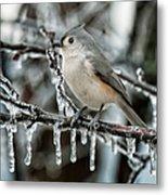 Winter Titmouse Metal Print
