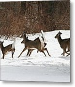 White Tailed Deer Winter Travel Metal Print