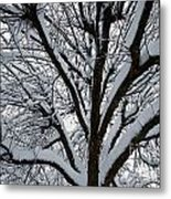 Winter Tree 1 Metal Print