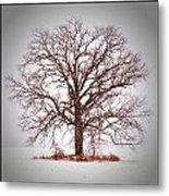 Winter Tree 8x10 Crop With White Bars Metal Print