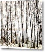Winter Tree Fence 13283 Metal Print