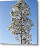 Winter Tree Germany Metal Print