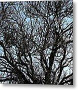 Winter Tree Hill End Nsw Metal Print