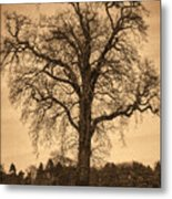 Winter Tree - Old Metal Print