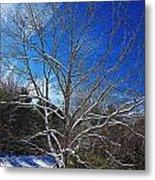 Winter Tree On Sky Metal Print