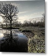 Winter Tree On The River Culm Metal Print
