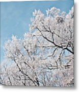 Winter Tree Scene Metal Print