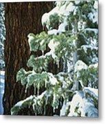Winter Tree Sierra Nevada Mts Ca Usa Metal Print