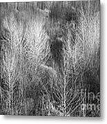 Winter Trees  B And W 1 Metal Print