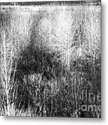 Winter Trees B And W 5 Metal Print