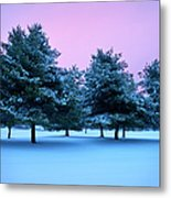 Winter Trees Metal Print by Brian Jannsen