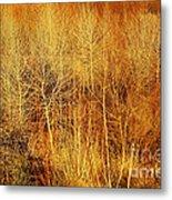 Winter Trees Color 4 Metal Print
