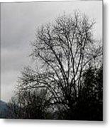 Winter Trees Number Four Metal Print