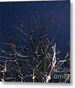 Winter Treetop Metal Print