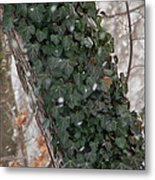 Winter Vine Metal Print