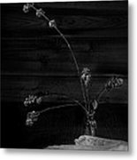 Winter Weeds In Bottle Black And White Metal Print