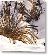 Winter Weeds Metal Print