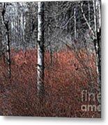 Winter Wetland I Metal Print