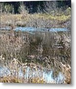 Winter Wetlands Of Alabama Metal Print