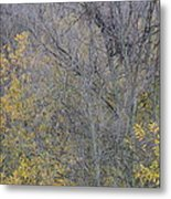 Winter Willows II Metal Print
