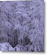 Winter Wonderland 1 Metal Print by Mike McGlothlen